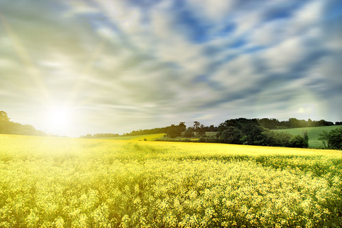 blue sunset sky sun field yellow 11mm rapeseed yearl2promotion peacepromotion musictomyeyespromotion heartawardpromotion peaceplatinumpromotion peaceplatinumsecondchance