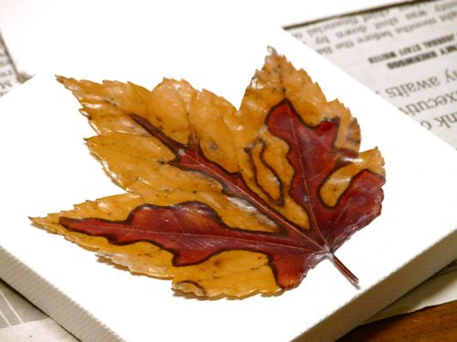 Using Mod Podge to mount fall leaves to small canvases
