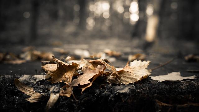 FV Flickr Top 5 (2-28): Autumn...the year's last, loveliest smile