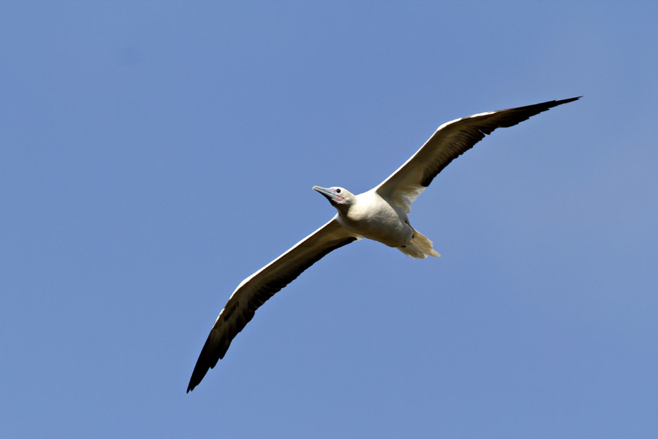 100513_08_list_redFootedBooby08