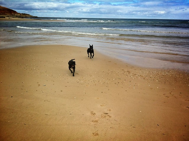Dogs on beach.