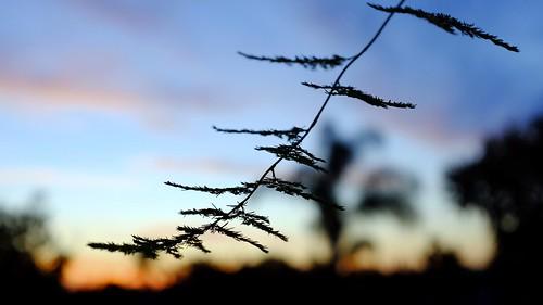 sunset silhouette velvia bluemonday vistaca northsandiegocounty fujifilmx100s chupacabrarunner
