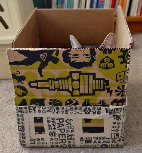 cat in a box inspiration