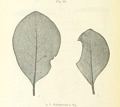 Image taken from page 204 of 'Wissenschaftliche Ergebnisse einer Reise in Griechenland und in den Ionischen Inseln, etc'