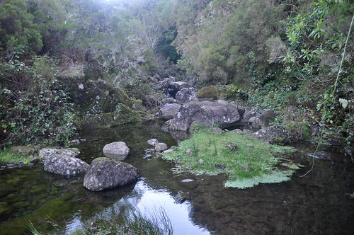 Ribeiro do Alecrim