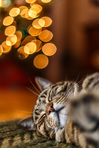 Dreaming of Santa Paws #Flickr12Days