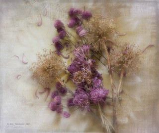 Dried Flowers from my Garden