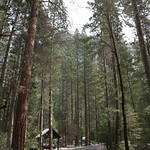 Yosemite loop