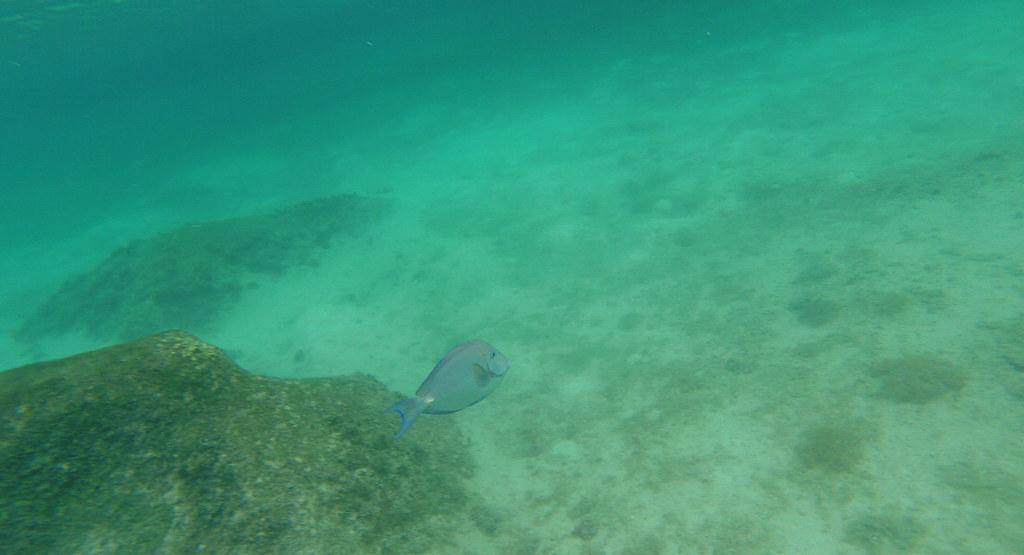 Yucatan trip photos from snorkling 11976463716_bd4730aa10_b