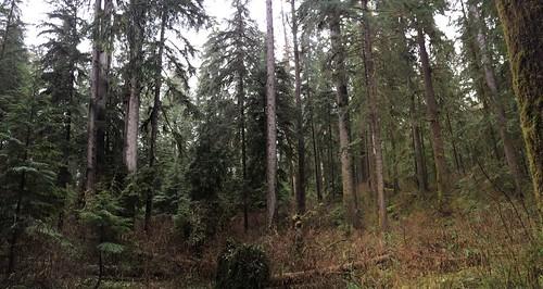 Gatton Creek Trail 15