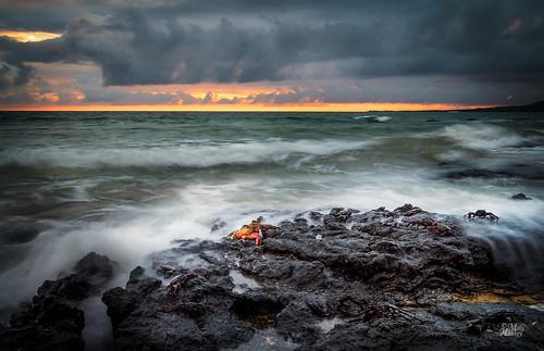 sunset seascape southamerica crab galapagos january2014