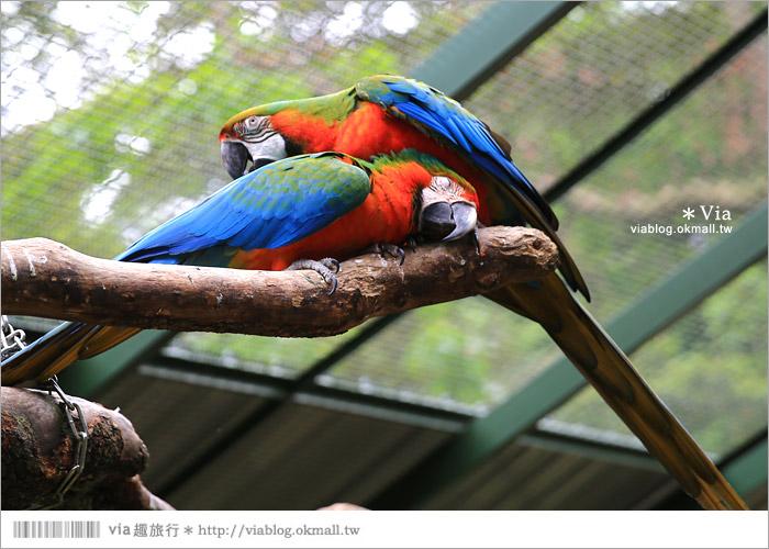 【新竹景點推薦】森林鳥花園~親子旅遊的好去處!在森林裡鳥兒與孩子們的樂園38