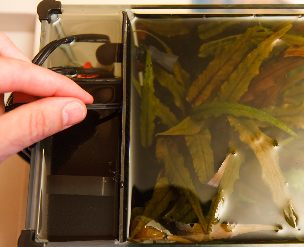 How to Make a DIY Aquarium Temperature Controller #AE581D
