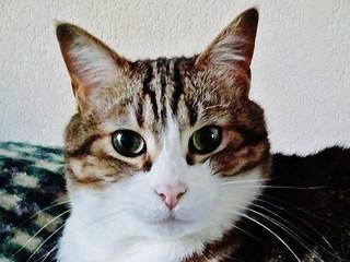 Mon chat Pistou (décédé en Septembre 2013)