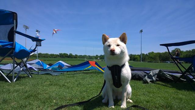 Kira at Kite Festival 3