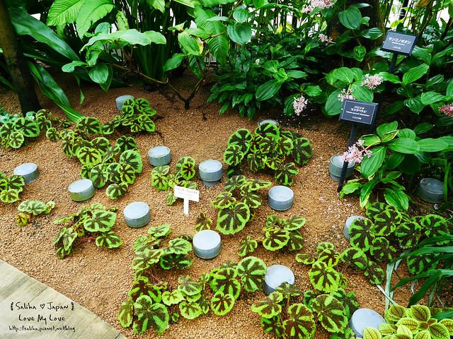 日本東京景點新宿御苑溫室植物 (17)