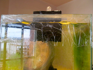 "Saran Wrap Frog Tank ""Lid"""