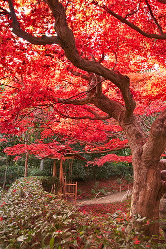 【写真】2012 紅葉 : 厭離庵/2020-10-15/IMGP7830
