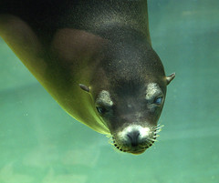Seal 08-28-2008 5