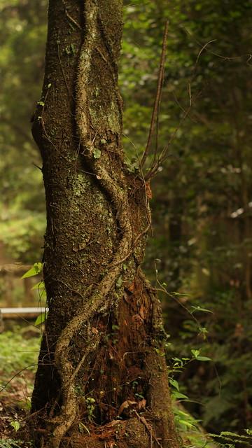 03_tree_3