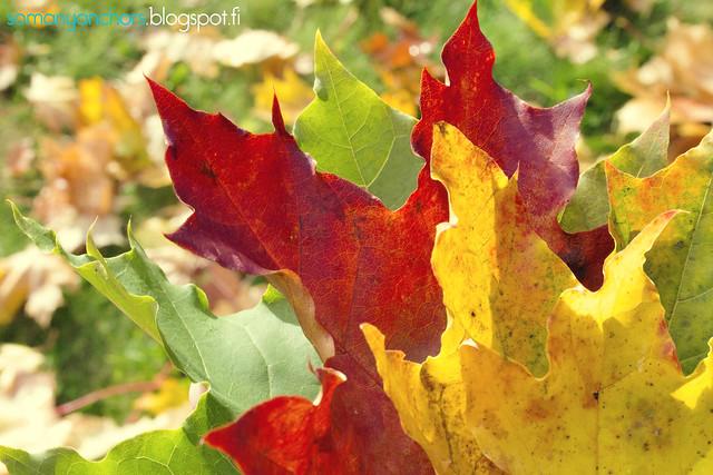 värikkäät lehdet