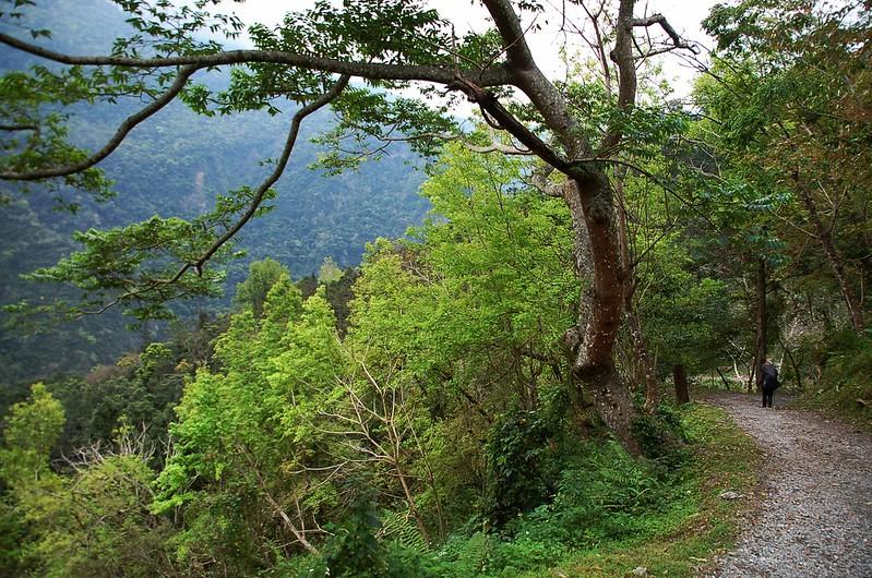 瓦拉米步道 3