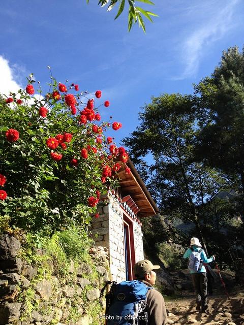 红红的花儿,蓝蓝的天