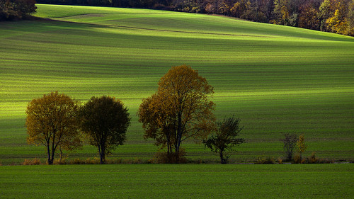autumn light shadow color green nature field leaves canon germany deutschland thüringen ngc herbst thuringia blätter bunt fantasticnature ef70200mmf4lisusm canoneos5dmarkii