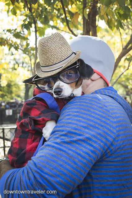 Halloween Dog Costume_Hipster Dog_Ragu_Dachshund 2