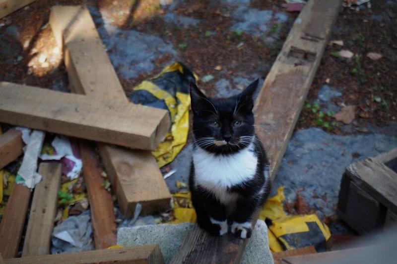 Stray-Cats-Istanbul-(20)