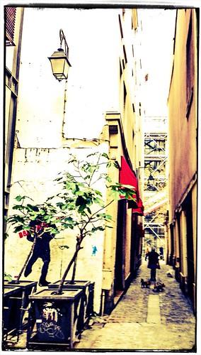 Dogs of Venise by Paris Set Me Free