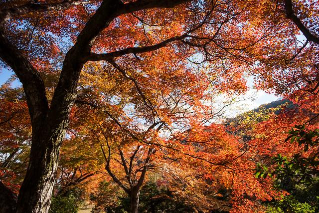 Arashiyama, 2013