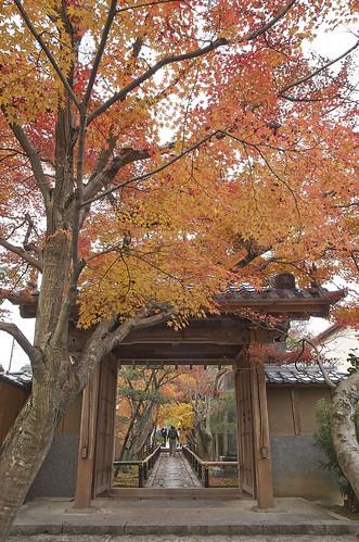 【写真】2013 紅葉 : 光悦寺/2013-12-02/IMGP4433