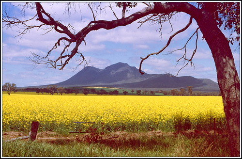 sky mountain tree film grass leaves clouds fence landscape pentax farm hill farmland hills crop land albany canola eucalypts gumtrees stirlings greatsouthern pentaxsupera supera pentaxkmount quantumentanglement justpentax pentaxart