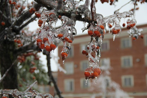 Frozen Cherry by Diastu SB