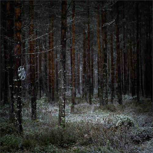 winter snow color forest photoshop suomi finland dark square woods nikon hubcap kuopio 2014 ok6 d700 ollik joutenjärvi 20140107 work3647