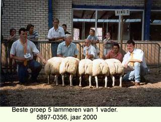 Lammeren 5897-0356 - 2000