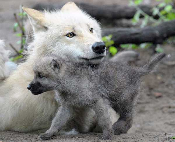 Congrats to Wollf & Karin....there's a baby wolffie in the house  12050710993_632da9bbbb_o