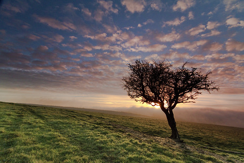 colour tree nature fog clouds sunrise landscape hampshire southdowns johnsinclair sinky911 windsweptstuntedtree