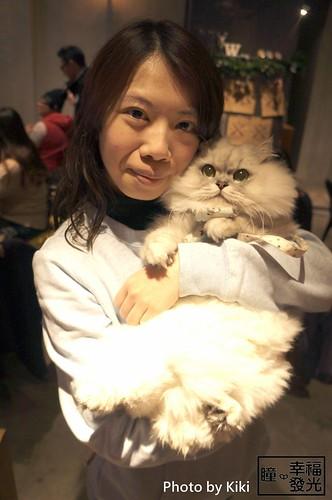 cat_5th (30)