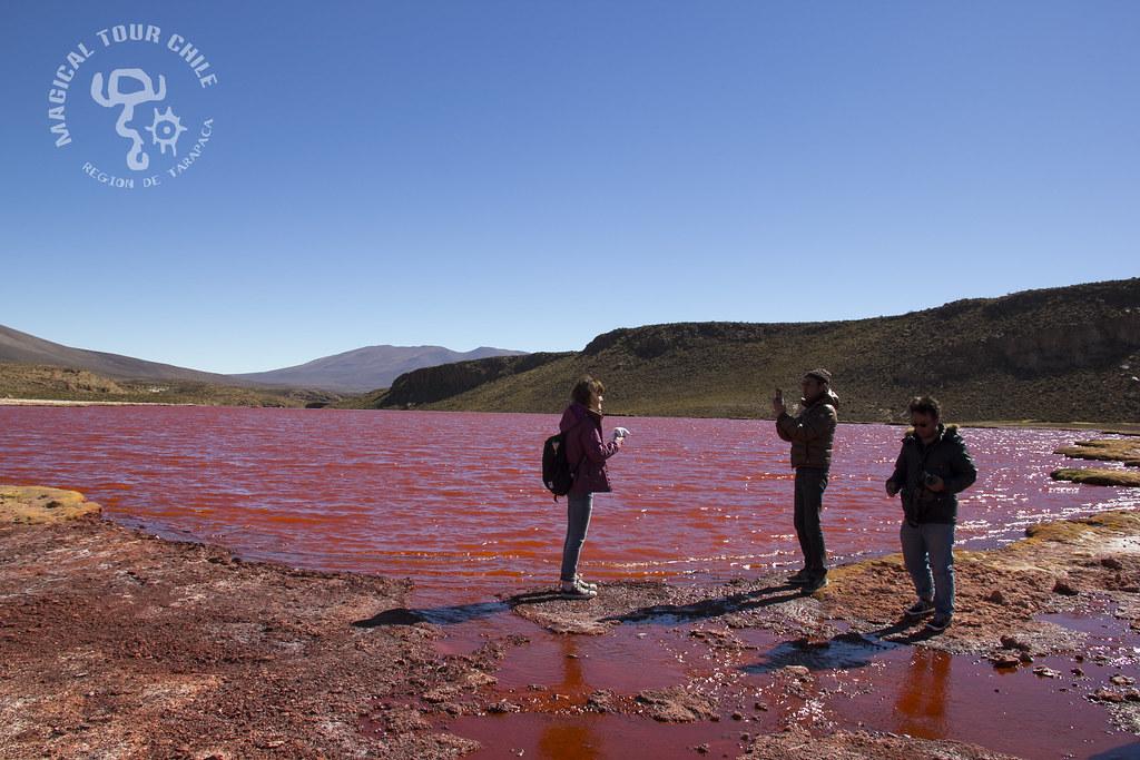Laguna Roja, Camiña , Mulluri