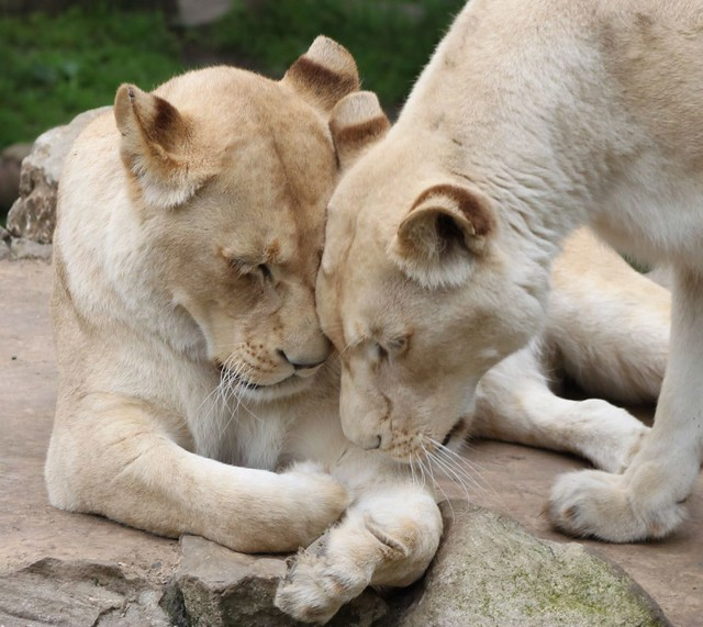 Sisterly Cuddles