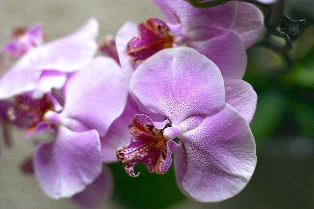 orquídea_4_20140522 - Version 2