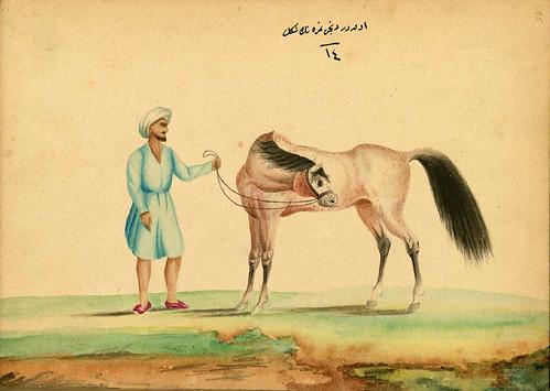 006-Estirando el cuello de un caballo que sufre de frío- Walters manuscrito W.661- fol 89 a.-The Art Walters Museum