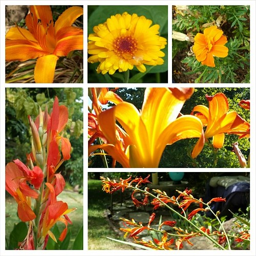 #orange blooms my July garden #summer #flowers #gardening