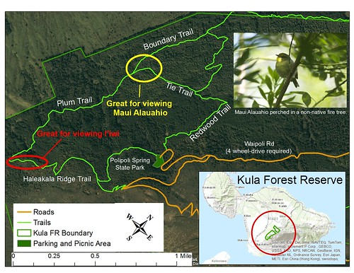 Kula Forest Reserve Birding Map