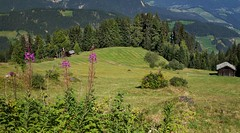 Alta Val Badia - I Prati dell'Armentara