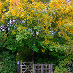 292/366 - Wooden gate