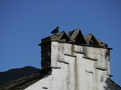 Chimneys & Crow
