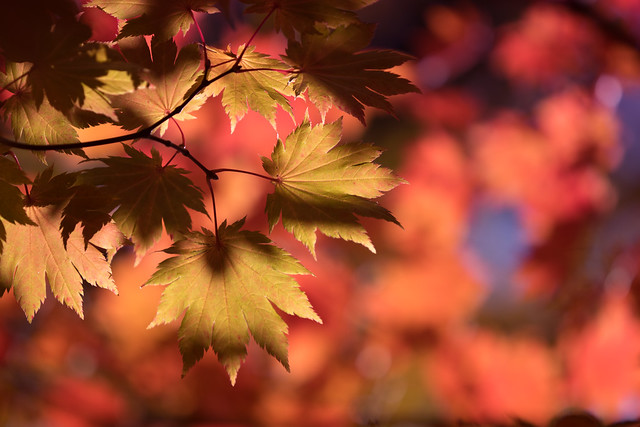 The Drama of Autumn